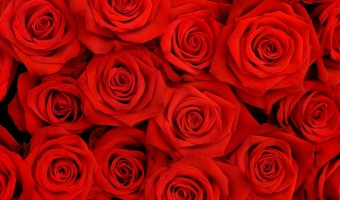 Florists & Garden Shops